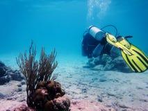 mergulhador foto de stock royalty free