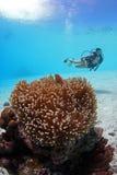 Mergulhador imagem de stock royalty free
