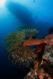 Mergulhador foto de stock