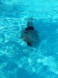 mergulhador Fotografia de Stock Royalty Free