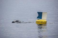 Mergulhador Below Foto de Stock
