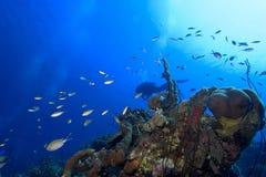Mergulhador, Bonaire Imagem de Stock Royalty Free