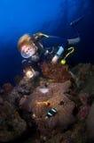 Mergulhador da mulher acima do anemone. Indonésia Sulawesi imagens de stock royalty free