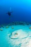 Mergulhador da mulher com uma raia Fotografia de Stock