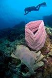 Mergulhador da mulher no recife. Fotografia de Stock
