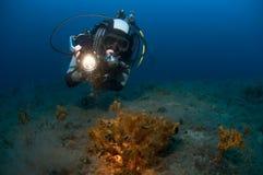 Mergulhador da mulher que aponta a lâmpada no recife. foto de stock