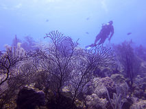 Mergulhador de MERGULHADOR Foto de Stock