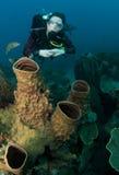 Mergulhador de mergulhador da mulher imagens de stock royalty free