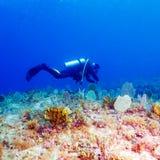 Mergulhador de mergulhador do homem novo imagens de stock