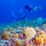 Mergulhador de mergulhador do homem novo Imagem de Stock Royalty Free