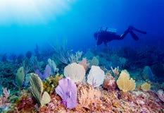 Mergulhador de mergulhador do homem novo fotografia de stock royalty free