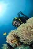 Mergulhador de mergulhador masculino observando um anemone de mar. imagem de stock