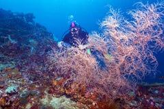 Mergulhador de mergulhador no fundo do recife fotos de stock