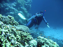 Mergulhador dentro profundamente imagem de stock royalty free