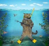 Mergulhador 2 do gato Imagens de Stock Royalty Free