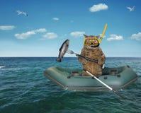 Mergulhador do gato que deriva em um barco de borracha imagens de stock