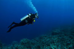 Mergulhador do mergulhador Fotos de Stock