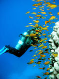 Mergulhador do mergulhador da mulher imagens de stock royalty free