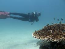 Mergulhador e corais e peixes sob a água nas Filipinas imagens de stock