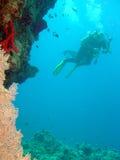 Mergulhador e coral Fotografia de Stock Royalty Free
