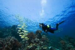 Mergulhador e Goatfish Fotos de Stock