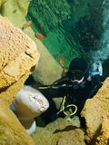 Mergulhador e tubarão de enfermeira corajosos Foto de Stock Royalty Free