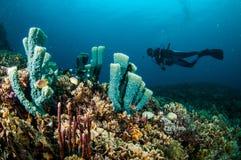 Mergulhador e vários recifes de corais na foto subaquática de Gili Lombok Nusa Tenggara Barat Indonésia foto de stock royalty free