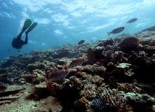 Mergulhador em um recife Foto de Stock Royalty Free
