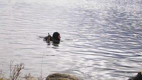 Mergulhador entra na água do lago da montanha técnicas de treino para socorros imersão em água fria video estoque