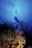 Mergulhador mediterrâneo imagem de stock
