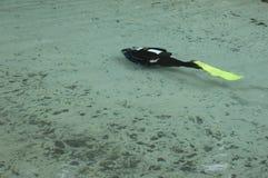 Mergulhador no funcionamento da mola foto de stock royalty free