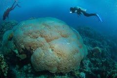 Mergulhador no reaf Imagens de Stock Royalty Free