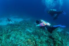 Mergulhador no reaf Foto de Stock Royalty Free