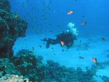 Mergulhador no recife Fotografia de Stock