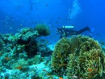 Mergulhador no recife imagens de stock royalty free