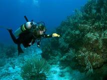 Mergulhador que explora o recife com uma lanterna elétrica Imagens de Stock Royalty Free