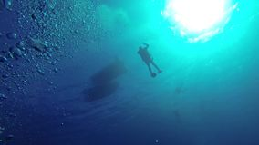 Mergulhador sob a superfície da água vídeos de arquivo
