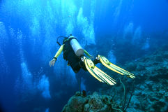 Mergulhador sobre a borda Imagem de Stock