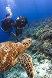 Mergulhadores de mergulhador que nadam com tartaruga fotografia de stock royalty free