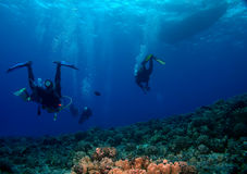 Mergulhadores do mergulhador que dirigem de volta ao barco Imagens de Stock