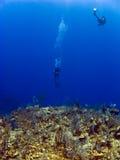 Mergulhadores fora da parede no caimão Brac Foto de Stock