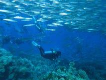 Mergulhadores no recife imagens de stock royalty free