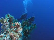 Mergulhadores no recife imagens de stock
