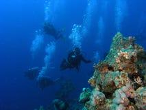 Mergulhadores no recife Fotografia de Stock
