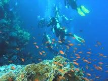 Mergulhadores no recife fotos de stock royalty free