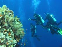 Mergulhadores no recife foto de stock
