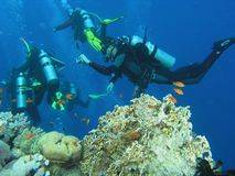 Mergulhadores no recife imagem de stock