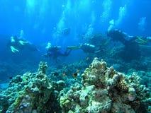 Mergulhadores no recife Imagem de Stock Royalty Free