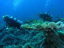 Mergulhadores no recife fotos de stock