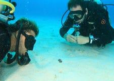 Mergulhadores que olham chocos chamativos fotos de stock royalty free